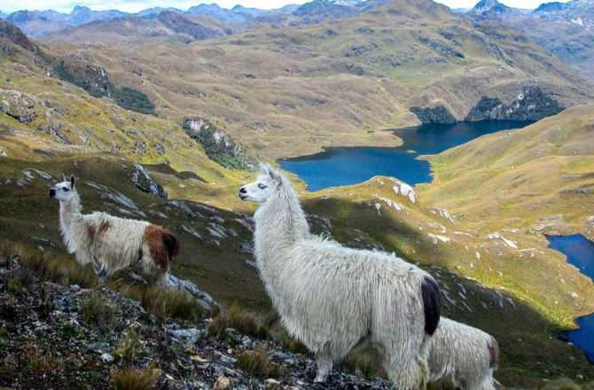 things to do in cuenca cajas